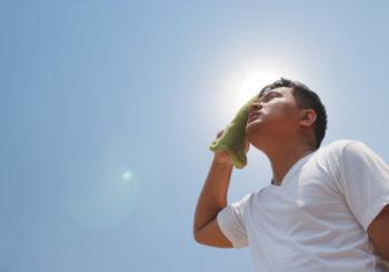 La disidratazione altera forma e attività del cervello