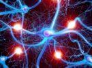 """Il sistema di pulizia cellulare """"inceppato"""" che potrebbe favorire l'Alzheimer"""