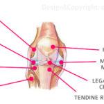 la-patologia-del-ginocchio-nel-bambino-gruppo-forte-salerno